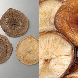 乾椎茸荒葉4cm~6cm
