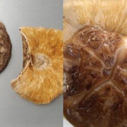 国産乾椎茸大荒葉(茎切)