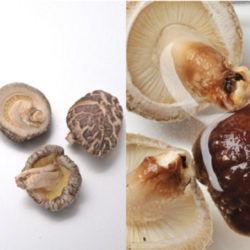 国産乾椎茸3cm~4cm(茎付)