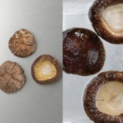 国産乾椎茸4cm~5cm(茎切)