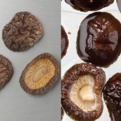 乾椎茸ホール2.5cm~3cm